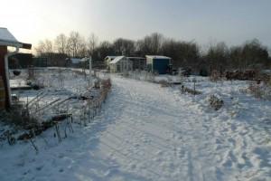 Vinter i haverne